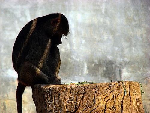 05-Sad-Monkey